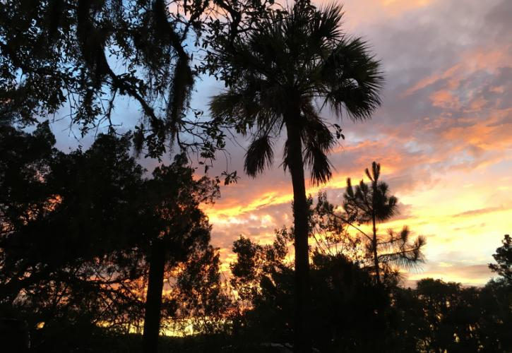 palm and pine trees are outlined by a colorful sunset