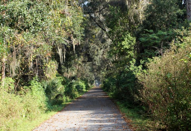 a paved trail extends through a thick canopy of trees and undergrowth