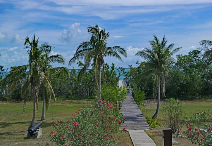 view from the house showing the coconut palms, walkway and blue water.