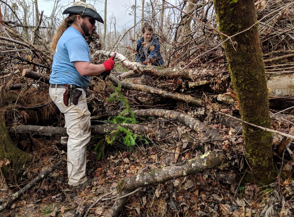 Two Volunteers from Atlanta Botanical Gardens remove Hurricane Michael debris from a Torreya tree