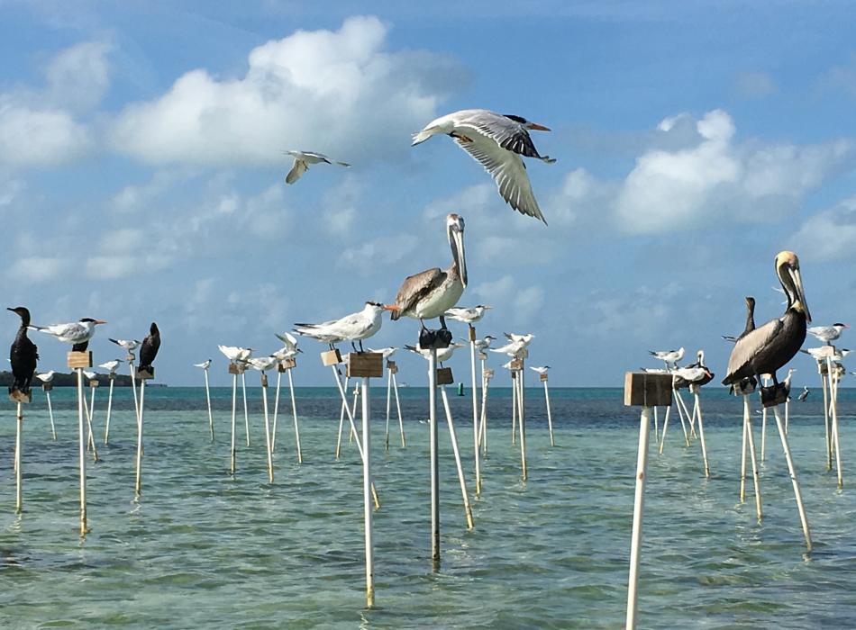 Variety of Birds using Bird Stakes
